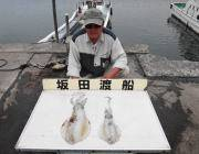 黒島の磯 11日ヤエンでのアオリイカ釣果