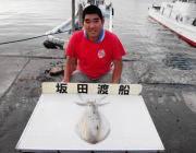 ウキ釣りでのアオリイカ釣果 黒島の磯