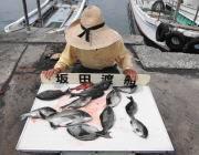 黒島の磯 グレ11匹にチヌの釣果