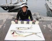シイラが釣れています☆黒島の磯