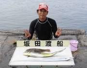 黒島の磯ルアー釣果 シイラのほかヒラメ&タチウオも