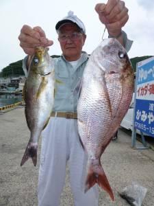 神谷一文字 カゴ釣りでマダイ53cm&イサギ34cm