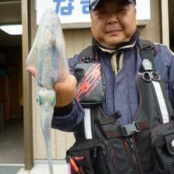 湯浅の磯 エギングでアオリイカ〜1.06kgの釣果