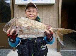 イワシカラーのミノーで、74cmの立派な真鯛!!