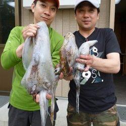 湯浅エリア、ヤエンとエギングでアオリの釣果あります!