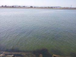 紀ノ川河口 ブッコミ釣りでのウナギ釣り
