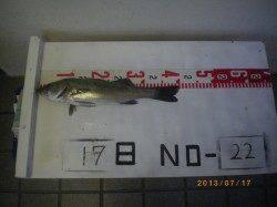 姫路市立遊漁センター シラサでハネ釣り