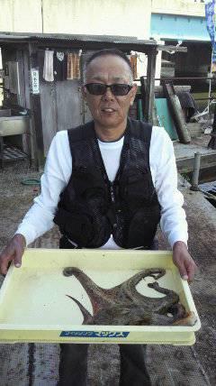 【蛸・タコ・たこ】岸和田でタコ大漁中!