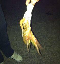 夜のタコ釣り!楽しいよ!!