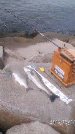 シラサエビでハネとキビレ!南芦屋浜石畳