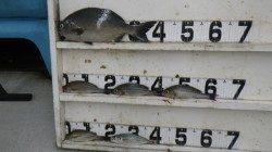 見草でオキアミフカセ釣り〜時合いで釣れました♪〜