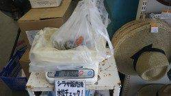 堺堤防グランド前でエギング 〜アオリ760g〜