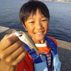 高砂港でのルアーとサビキの釣果