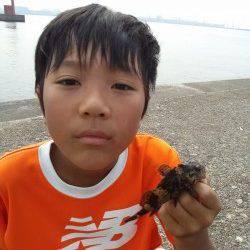高砂港 穴釣りでアコウ狙いもガシラ&タケノコメバル