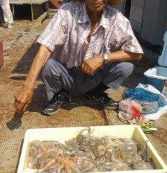 岸和田・タコはまだまだ釣れています!