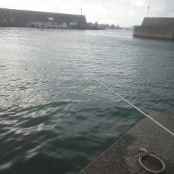 田村漁港 夕方の紀州釣りでチヌ31cm&22cm