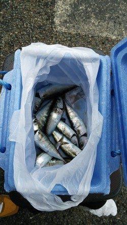 【9時頃から小サバがHIT】南芦屋浜サビキ釣行