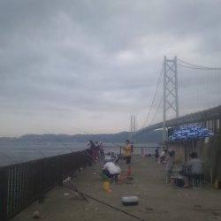 アジュール舞子 サビキ&サヨリ釣りは快釣☆ 大サバは場所もあり顔見れず