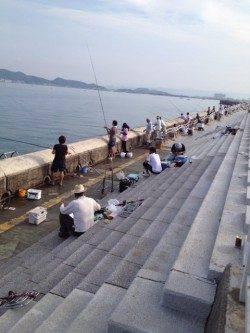 和歌山マリーナシティ サビキで豆アジ大漁 タチウオはアタリなし