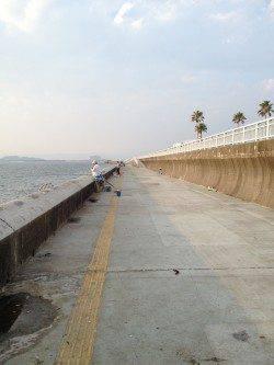 和歌山マリーナシティ カゴ釣り&ウキ釣りでサヨリ・アジの釣果