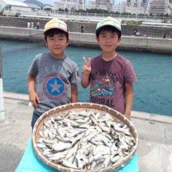 マリーナシティ海釣り公園 サビキのアジ超大漁!