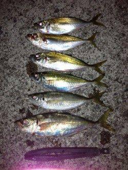 田辺・戎漁港 アジングでアジ〜27cm6尾 満潮手前で当たりが集中