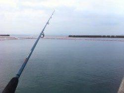 須磨の岸壁から投げ釣り、キス・ベラ・コチ
