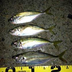 田辺・戎漁港 アジングでアジ〜24cm4匹 カラーは白や黄色がオススメ
