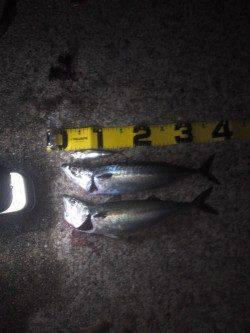 アジュール舞子 夜のウキ釣りでサバ ぶっこみ釣りでアナゴ・ガシラ