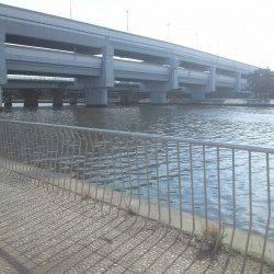 武庫川河口でちょい投げ 短時間でハゼ大漁!