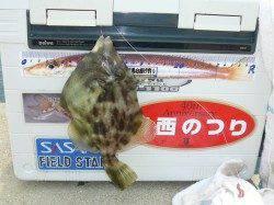 洲本 投げ釣りでキス&カワハギの釣果☆