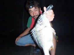 大阪南港 チニングでキビレ〜43cm16尾の好釣果!