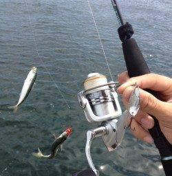 楽釣!【サバゲー】お昼でも当たりっぱなし!!