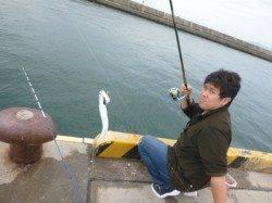 須磨にてサビキ釣り!