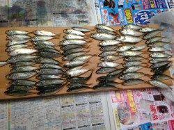 西宮浜でアジ入れ食い!サビキ釣果