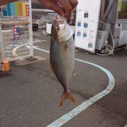 マリーナシティ海釣り公園、メタルジグでシオGET!