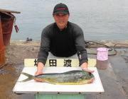 黒島の磯でのルアー釣り シイラ、イイサイズが出ています!