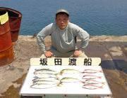 黒島の筏 良型マルアジにチャリコなど