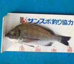上佐波賀イカダでチヌ41.5cmを頭に10匹