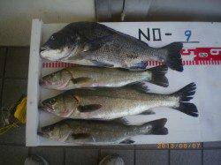 活アジを使ってチヌ47cmにセイゴ・ハネ!姫路市立遊漁センター