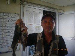 魚種多様に釣れています!姫路市立遊漁センター