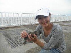 【良型ガシラにアコウ】南港海釣り公園