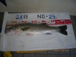 姫路市立遊漁センター ウキ釣りでスズキ・ハネ サビキでアジの釣果