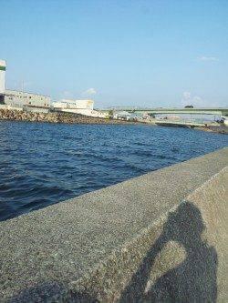 佐野川で夕方シーバスの釣果