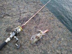 小島へ新子釣り、入れ食いの時間もありました!