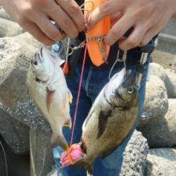 人生初のフカセ釣りへ