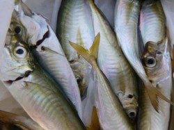 神戸空港 魚種豊富です