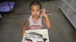 芳養にて、サビキ釣りコロダイ・ベラなどの釣果