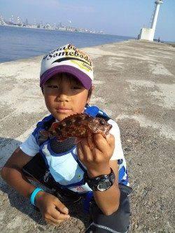 高砂港 探り釣りでガシラ4尾・ベラ・チャリコの釣果