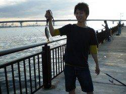 神戸空港 ルアーでカマス・イシモチ ジグサビキでサバなどの釣果